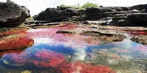 Cano Cristales Sungai Lima Warna di Kolombia Pemandangan Indah Cantik Luar Biasa